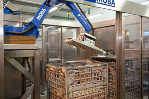 Our robots ensure accurate and efficient packing.
